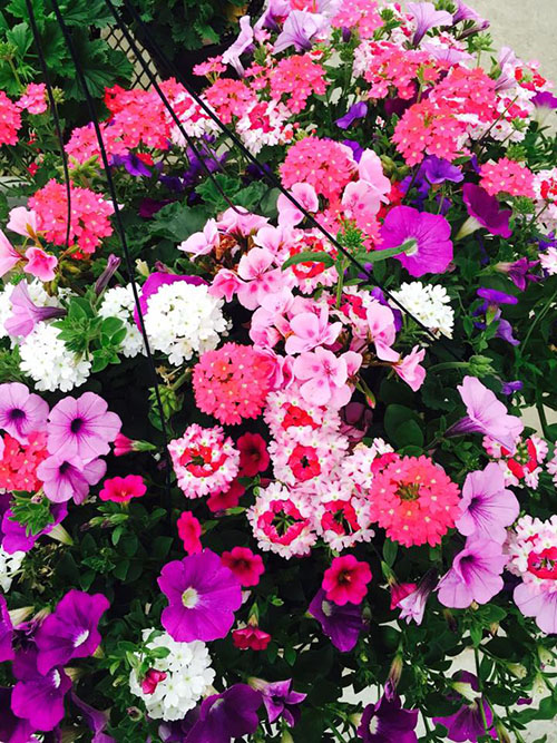 beautiful hanging baskets